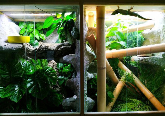 Terrarium dla gekona orzęsionego i felsumy madagaskarskiej z roślinami
