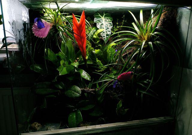 Terrarium z żywymi roślinami dla drzewołazów
